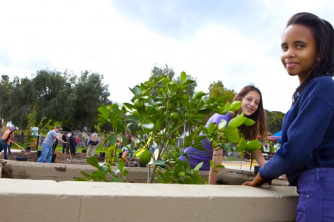 Volunteers plant fruit trees at Del Aire Fruit Park in Hawthorne, CA. Photo via Fallen Fruit
