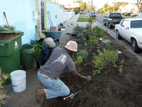 Ron Finely and friend tending his parkway garden. Photo via LA Green Grounds